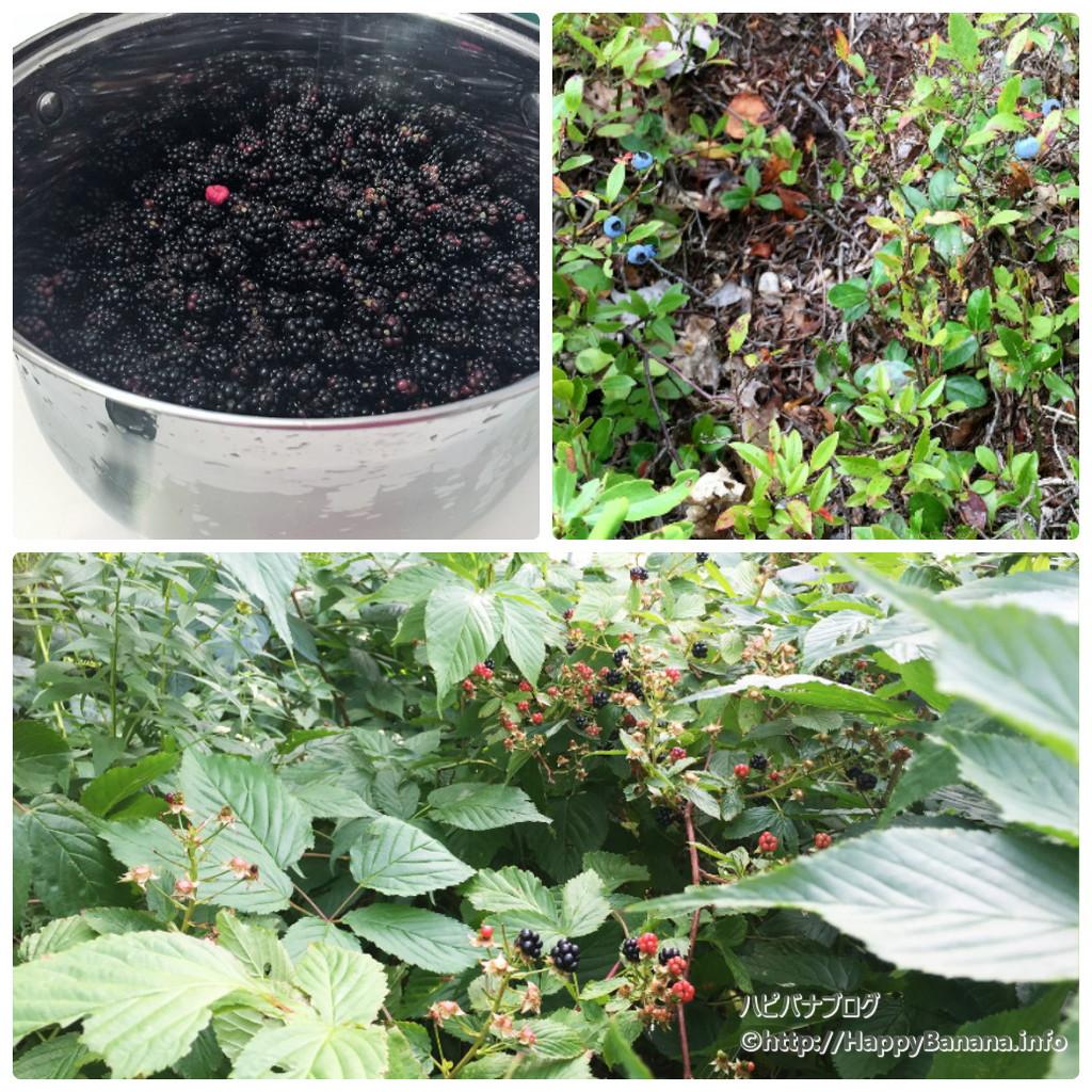 berry[1]