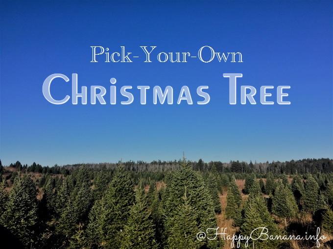 海外ならでは!クリスマスツリーを自分でカット出来る「モミの木狩り」が面白い