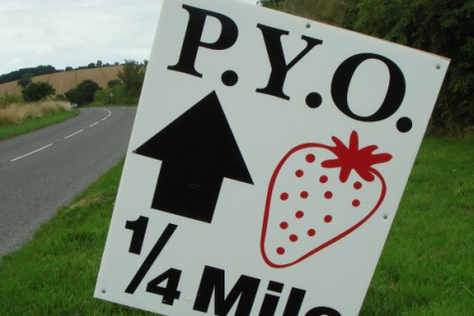fruit-picking-pyo