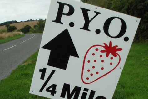 fruit-picking-pyo
