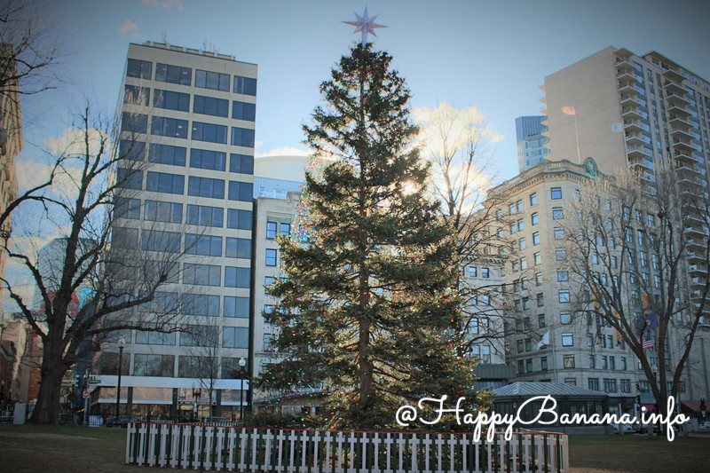 tree_for_boston_in_boston_common_2015
