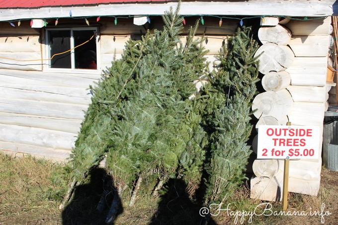 christmas_tree_upick_outside-tree