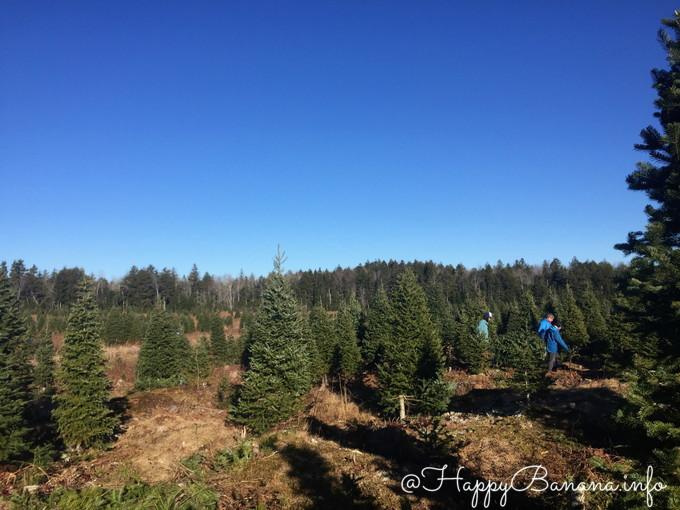 christmas_tree_upick_select_own