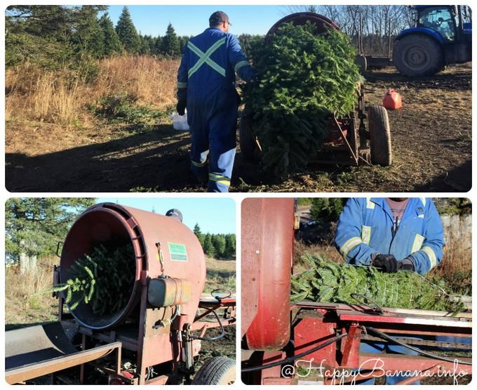 christmas_tree_upick_tie1